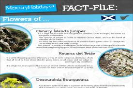 Fact file - the flowers of Tenerife