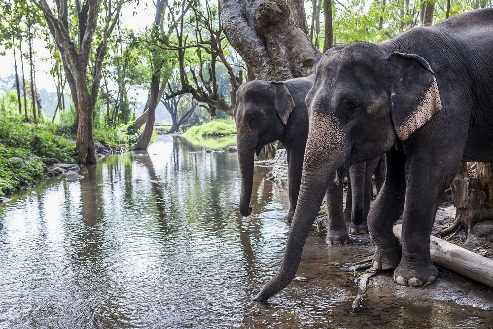 Elephants in Kerala