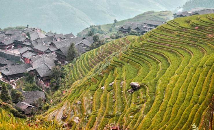 """Rice Terraces Yangshuo"""
