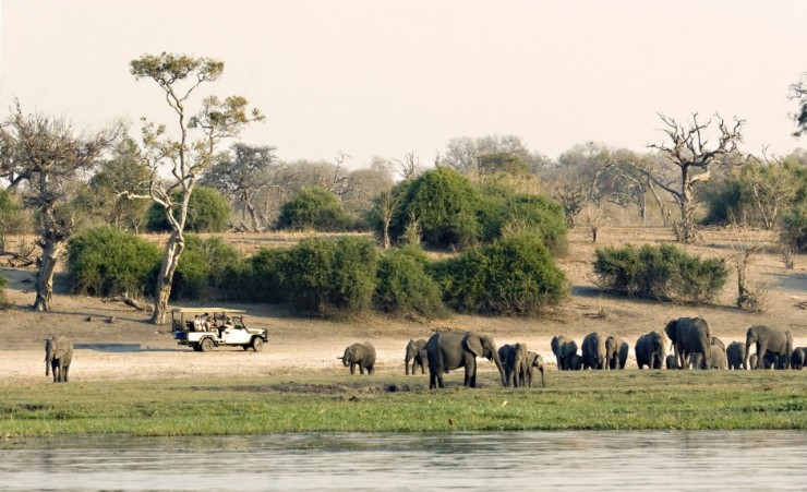 """Game Drive Along The Chobe River"""