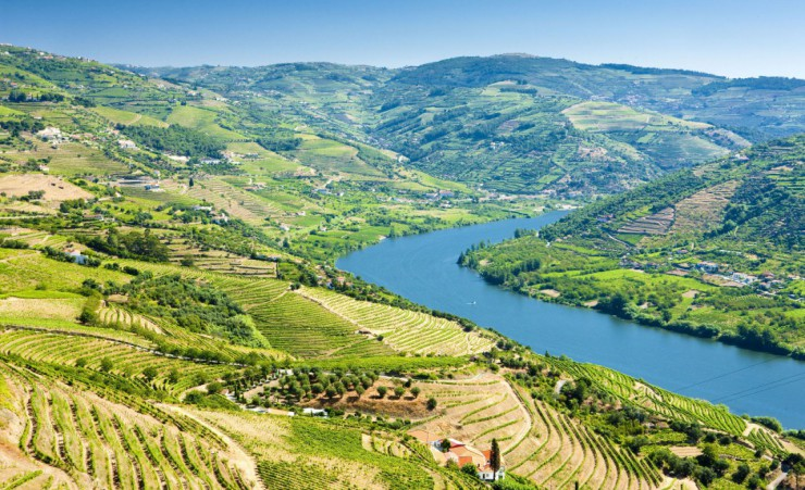 """Vineyards In The Douro Valley"""