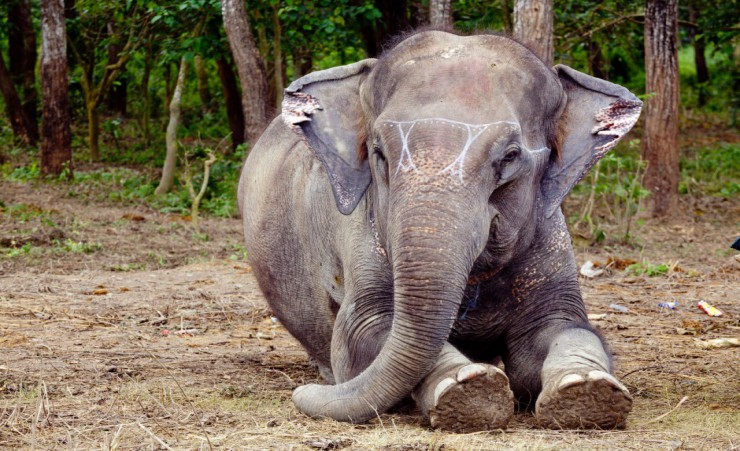 """Elephant Breeding Centre   Chitwan"""