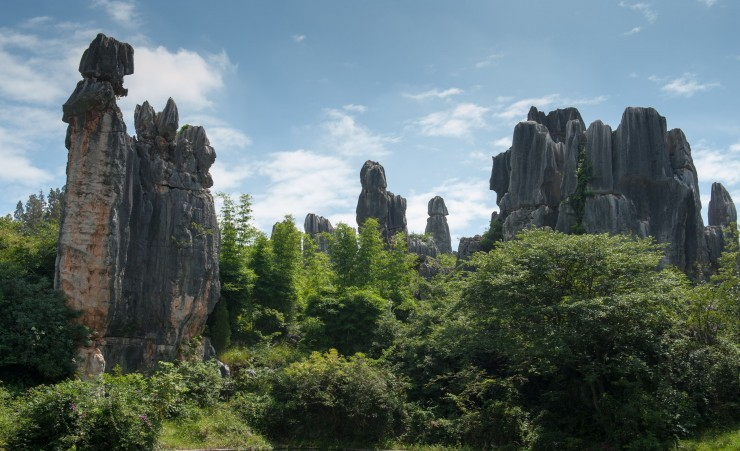 """Stone Forest"""