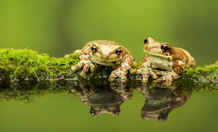 """Mossy Frogs 43865117"""