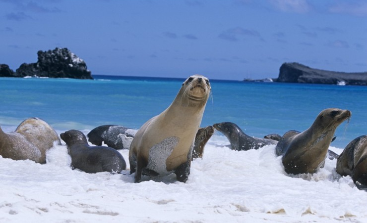 12 Day Galapagos Islands & Ecuador - Gate 1 Travel