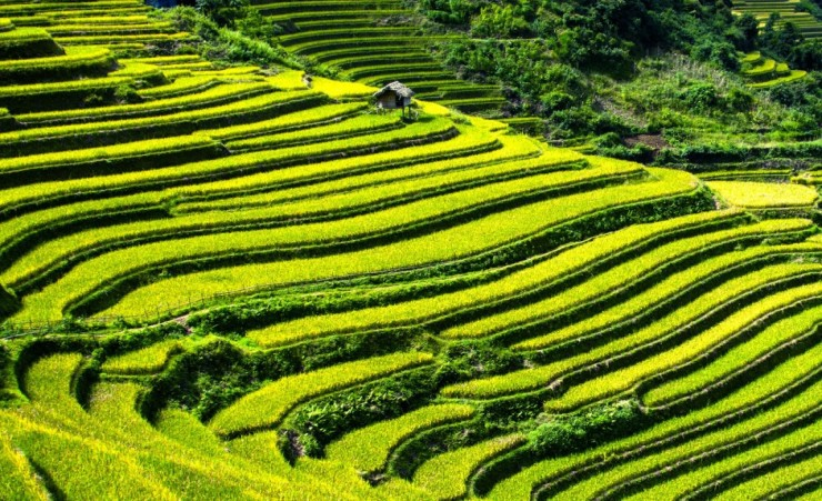 """Rice Terraces Vietnam"""